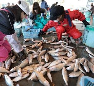 کشف آلودگی اتمی در ماهیهای ژاپنی