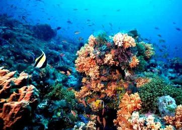 مرجان - خلیج فارس