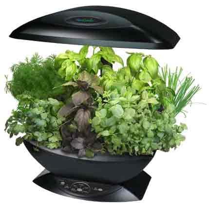 پرورش سبزی در داخل آپارتمان