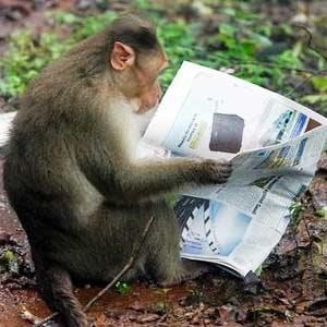 ایمپلنت کردن میتواند میمونها را باهوشتر کند
