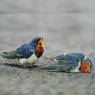 مراسم سوگواری در دنیای پرندگان