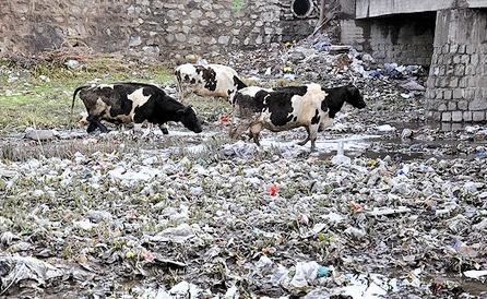 زباله - مازندران