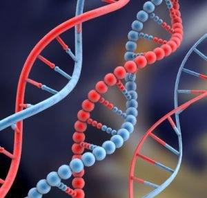 DNA مردان در مغز مادران