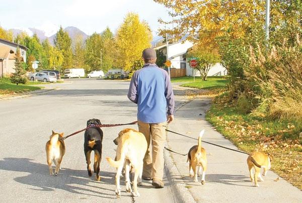 هشدار درباره بیماریهای مشترک انسان و سگ و گربه