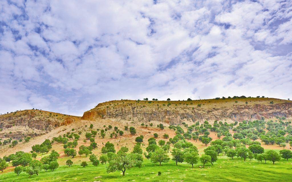 رشد دامداری در جنگل ها ناشی از سیاست های غلطی است که همچنان ادامه دارد.