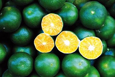 جدول   قیمت انواع میوه در میادین میوه و تره بار   هرکیلو نارنگی  ۱۵ هزار تومان