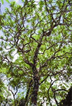 راز طولانی بودن عمر گیاهان نسبت به جانوران