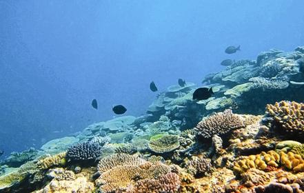 گرم شدن اقیانوسها و تشدید آلودگی جیوه در آبزیان