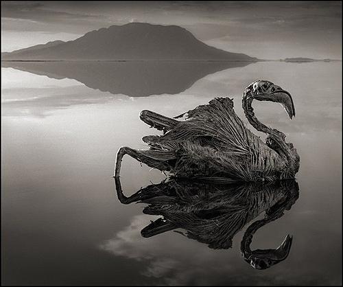 تصاویر دریاچهای که حیوانات را سنگ میکند