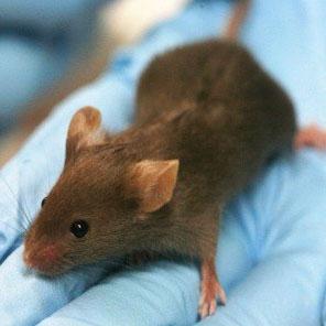 شیوهای برای رشد مجدد مو، بافت و استخوان موشها
