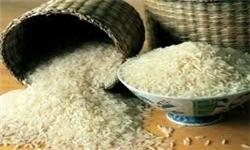 جمع آوری ۸ نوع برنج از بازار؛ تشدید نظارت وزارت بهداشت بر سلامت برنج