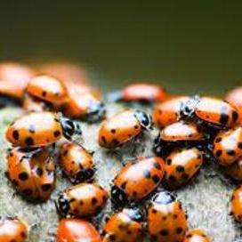 کنترل ترافیک به شیوه حشرات