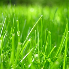جلوگیری از گازهای گلخانهای با نوع جدیدی از چمن