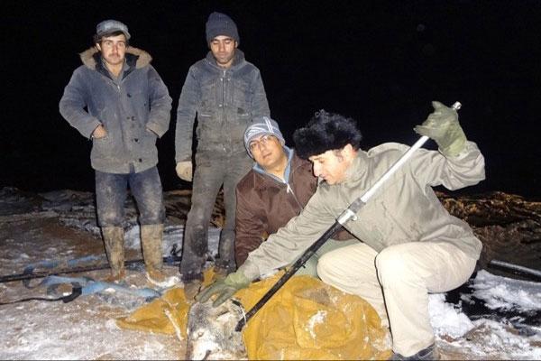 نجات گرگهای خاکستری پس از ۳ شبانه روز از داخل استخر