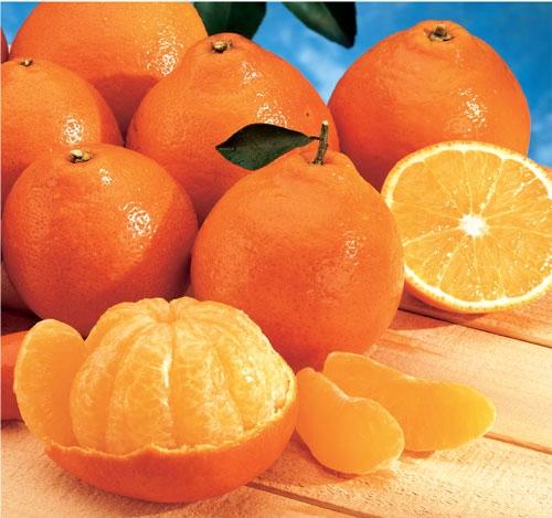 عطر پرتقال، بوی نارنگی: خداحافظ بیماری
