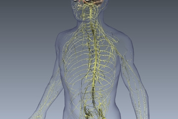 آشنایی با علائم و شیوه درمان آسیب طناب نخاعی
