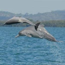 کشف گونه جدیدی از دلفین در آبهای استرالیا