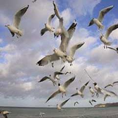 دلیجان، میزبان پرندگان مهاجر