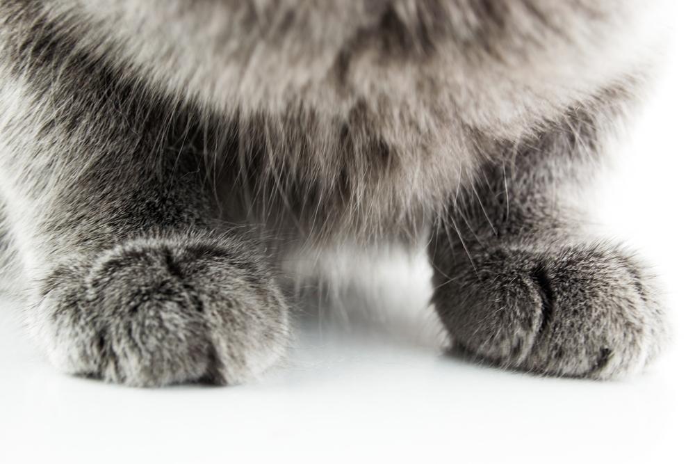 چرا گربهها روی سطوح را میخراشند؟