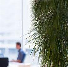 افزایش ۴۵ درصدی خلاقیت با گیاهان آپارتمانی
