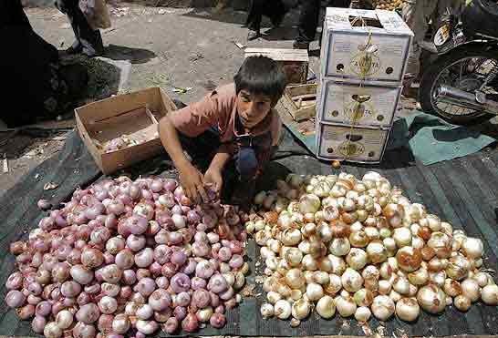 صادرات پیاز ممنوع شد؛ واردات موز آزاد