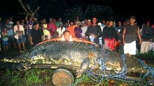 مرگ تمساح بزرگ