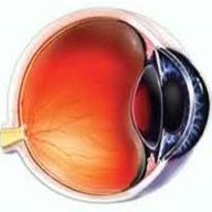 سلولهای بنیادی ماهی، بینایی را به انسان بازمیگرداند
