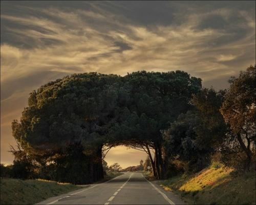 تونلهای درختی در طبیعت