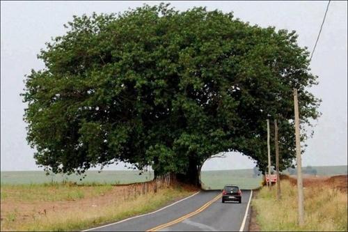 تونلهای درختی