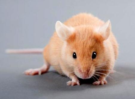 حس ششم؛ هدیه دانشمندان به موشها