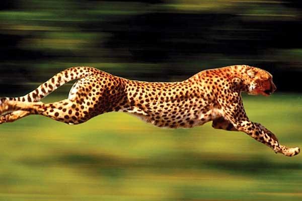 سریعترین حیوانات