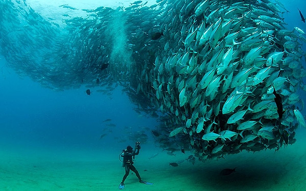 زیباترین عکس زیر آبی