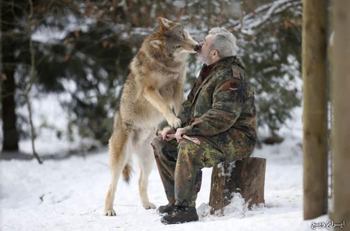 رهبر این گرگها یک مرد است