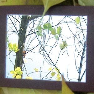 بهار میآید که درخت نفس بکشد