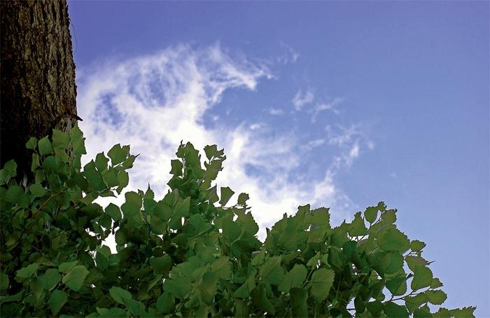 بر آید باد صبح و بوى نوروز