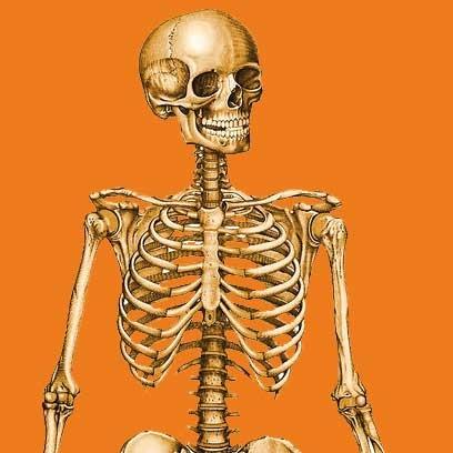 از استخوانهای خود چه میدانید؟