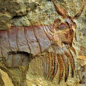فسیل 500 میلیون ساله