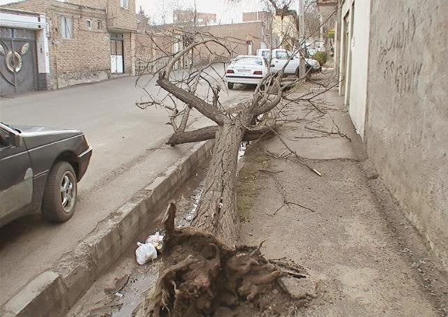 وزش باد - بوشهر
