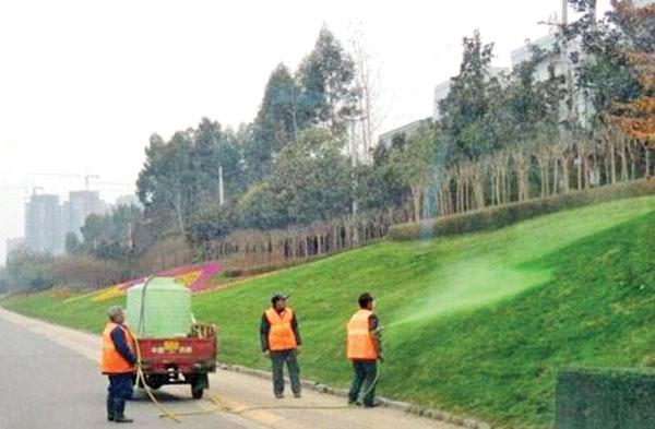 رنگ کردن چمن در چین