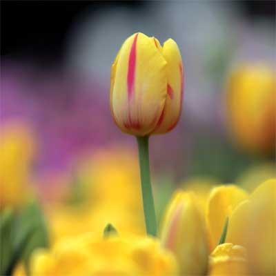 «جشنوارهی گلهای لاله» و پنج خبر دیگر