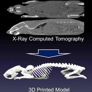 مدل سه بعدی اسکلت موجودات زنده