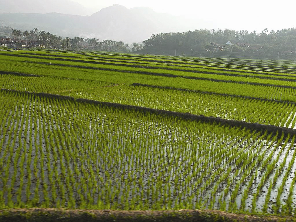 رشد تولید در مزارع، تعطیل!