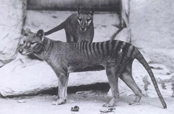 بازگشت حیوانات منقرض شده