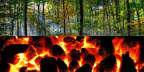مفاهیم: چرخه کربن چیست؟