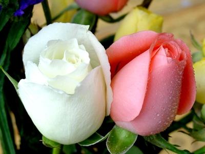 نگاهی به چگونگی ازدواجی که ثمرهاش آخرین فرستاده الهی روی زمین بود