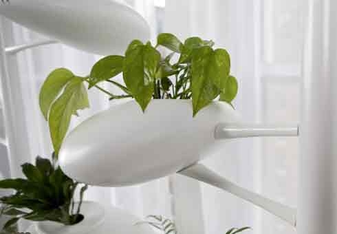 باغبانی هیدورپونیک در منازل