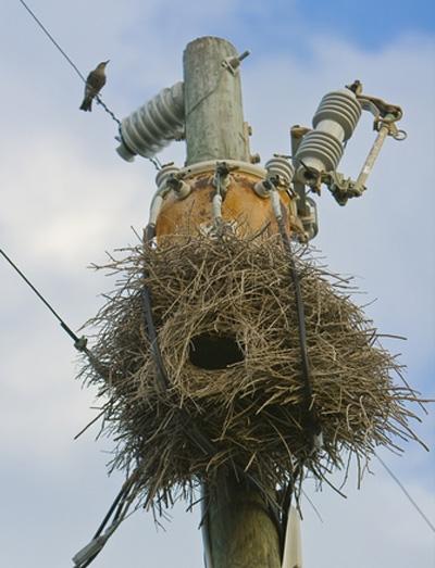 آشیانههای برقی پرندگان