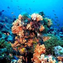 اختلال در تولید مثل آبسنگهای مرجانی در اثر آلودگی آب