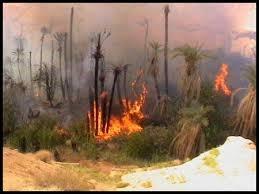 آتش سوزی - نخلستان