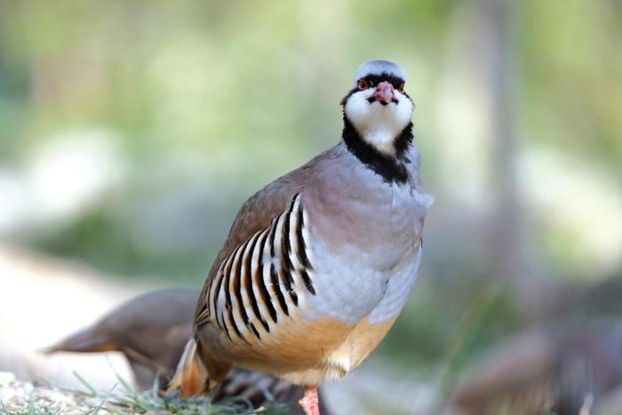 این پرندهها چیپس و پفک دوست ندارند!